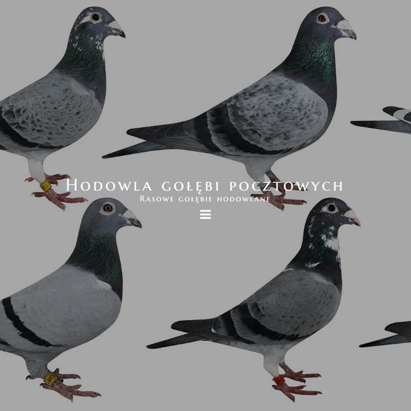 Gołębie komierówko